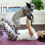 Your Yoga Questions Answered + Puppy!